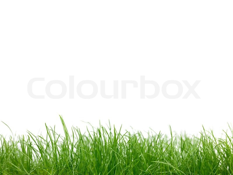 green grass siolated against a white background stock