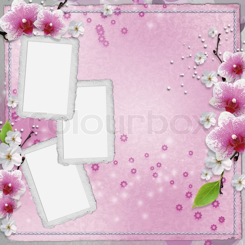 Paper frames for photo with pink orchids | Stock Photo | Colourbox