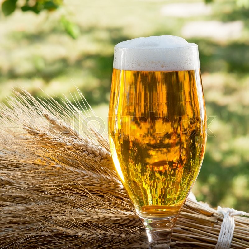Beer glass and raw material for beer production in the nature, stock photo