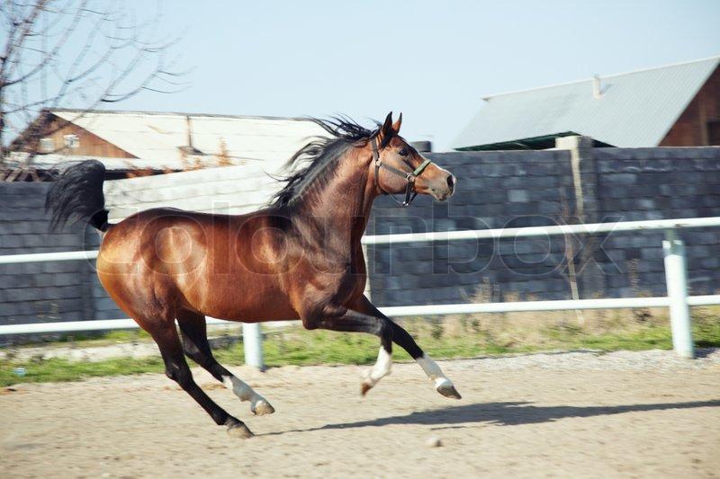 Light brown horse running - photo#8