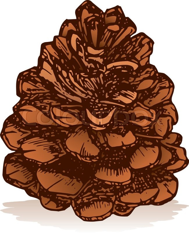 pinecone symbol auf wei u00dfem hintergrund skizze stil pine cone clip art on pinterest pine cone clipart for headstone