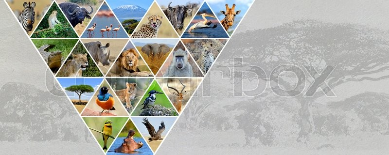 Stock Bild von 'outdoor, afrika, safari'