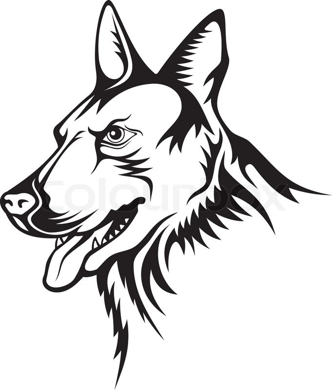 Contour Line Drawing Of A Dog : Tattoo illustration of german shepherd guard dog stock