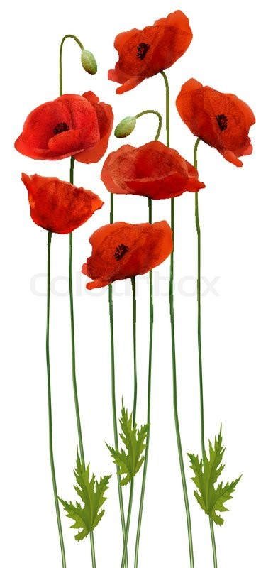 Bunch Of Poppies Flower Background Stock Vector Colourbox