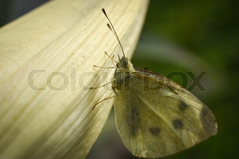 Stock foto af 'Butterfly on flower'