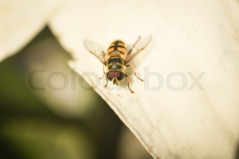 Stock foto af 'Bee on flower'