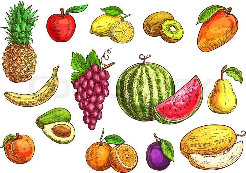 Fruits set. Sketch hand drawn illustration of isolated ...  Fruits set. Ske...