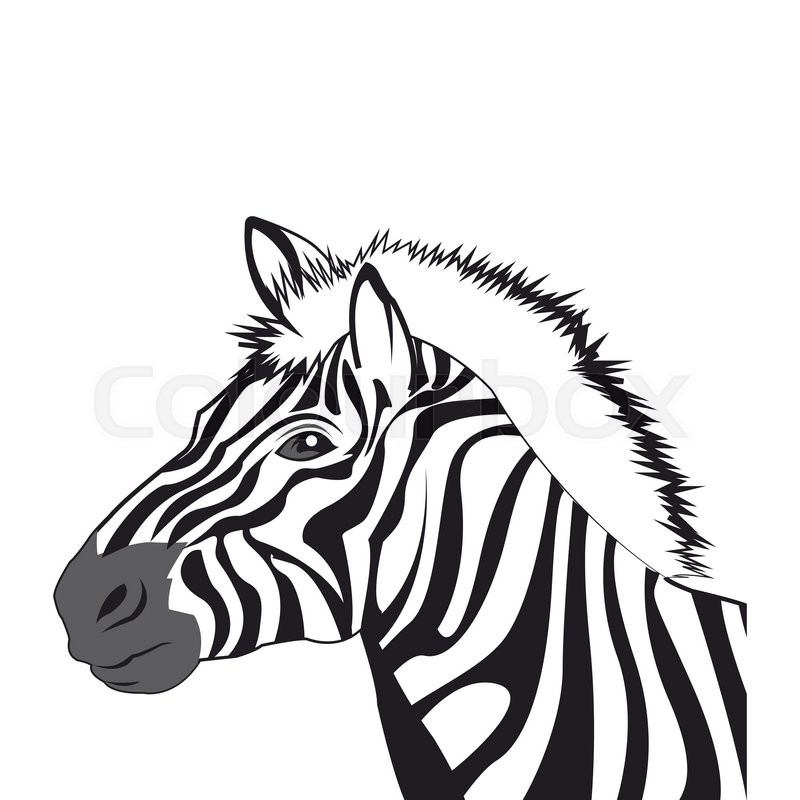 Flat design zebra drawing icon vector illustration | Stock ...