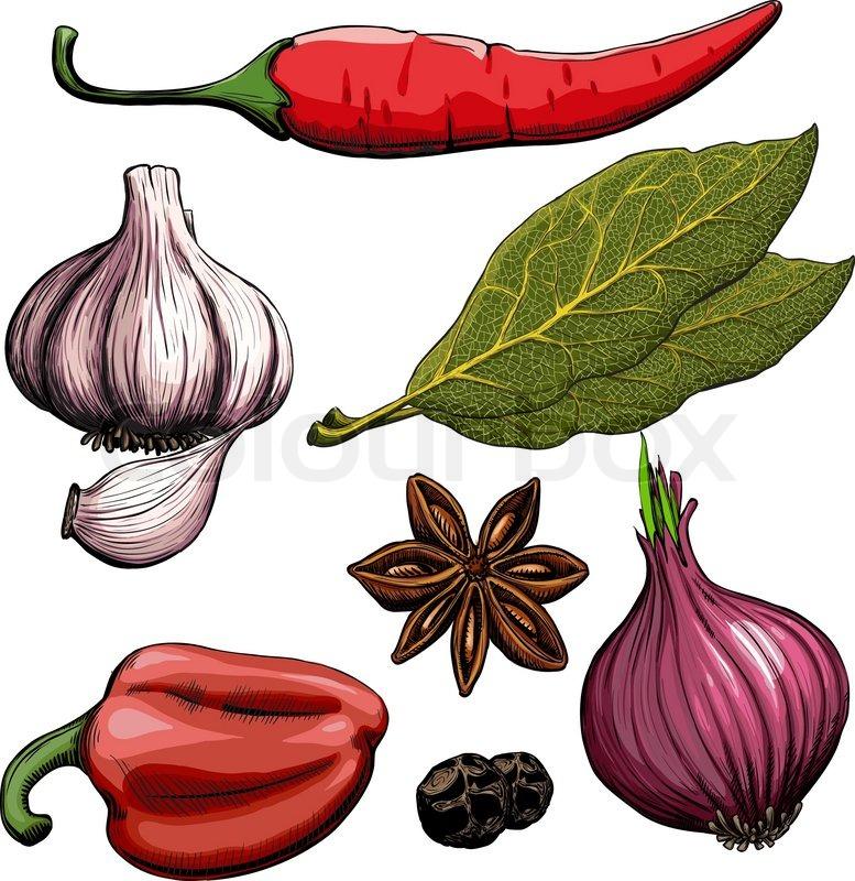 14 garlic clipart free  Public domain vectors