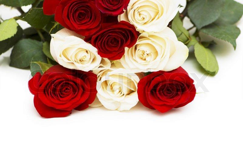 Rote und weiße Rosen isoliert auf weiß | Stock Bild | Colourbox