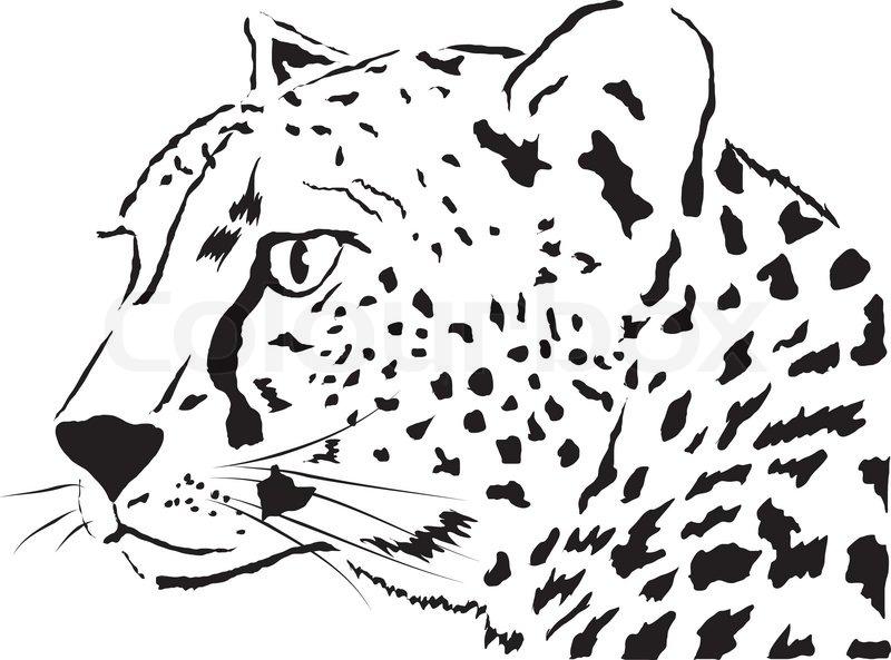 abstrakte gesicht leopard  natur