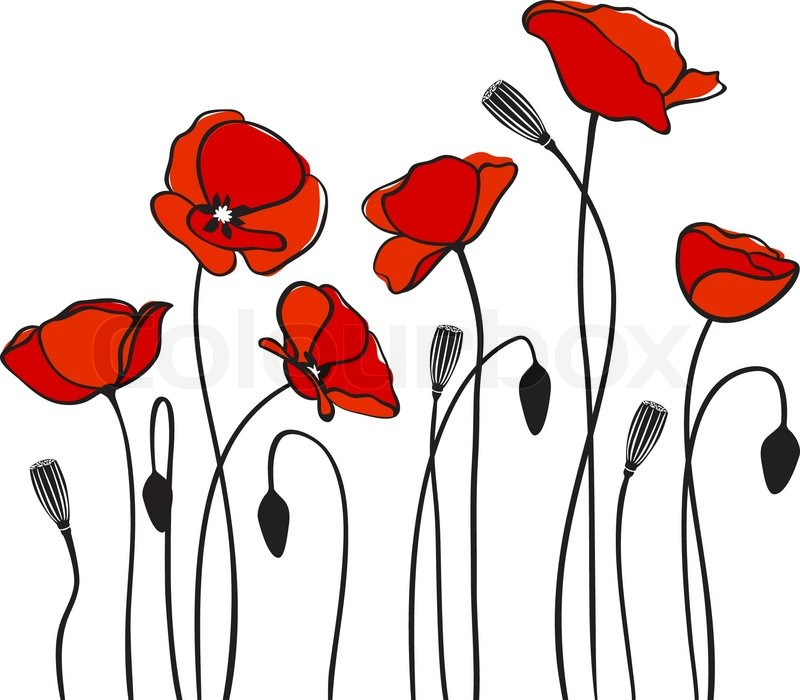 Red Flower Line Drawing : Abstract floral roten mohn karte vektor illustration
