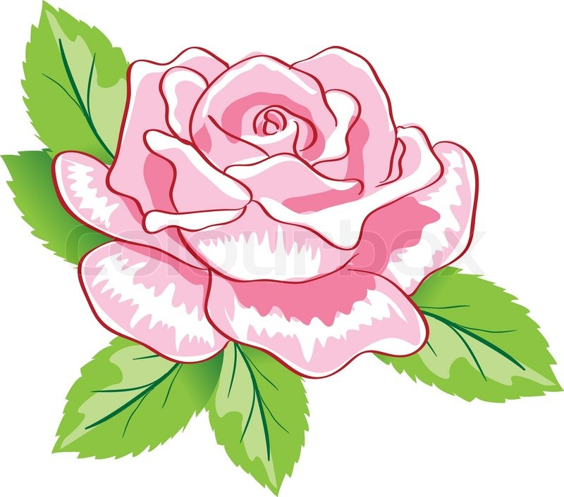 Rose outline vector image - Beauty Pink Rose Background Colorful Vector Illustration