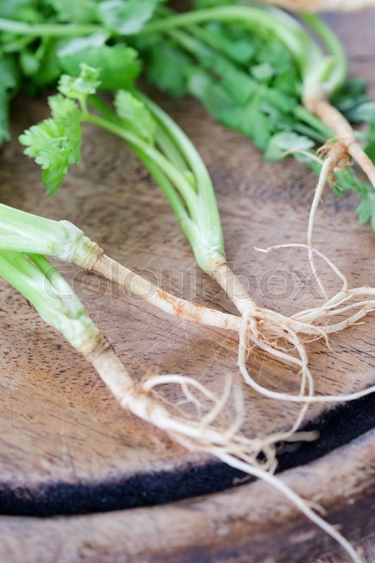 Bunch of fresh coriander on a wooden table, stock photo
