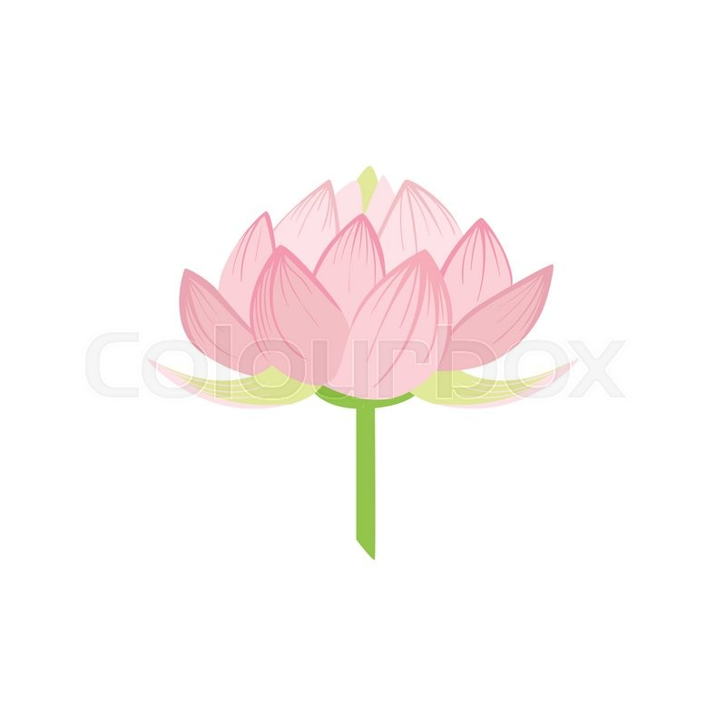 Padma lotus sacred indian flower country cultural symbol padma lotus sacred indian flower country cultural symbol illustration simplified cartoon style drawing isolated on white background stock vector mightylinksfo