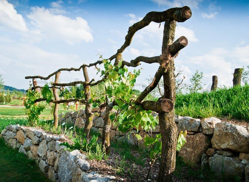 Wooden grapevine trellis on terrace of stones stock for Terrace farming model