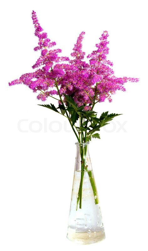 Bouquet of pink flowers in vase isolated on white background | Stock ...