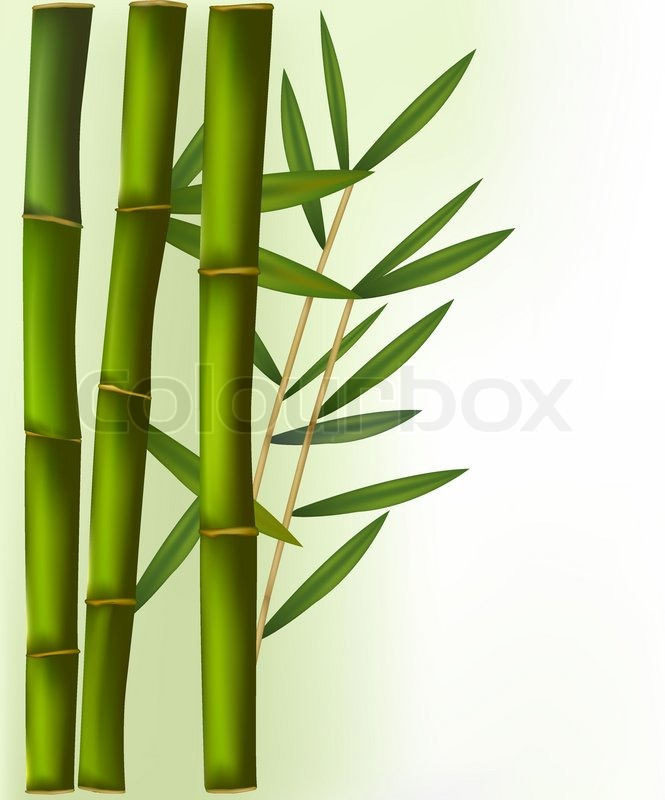 Bamboo Isolated On White Background Stock Vector Colourbox