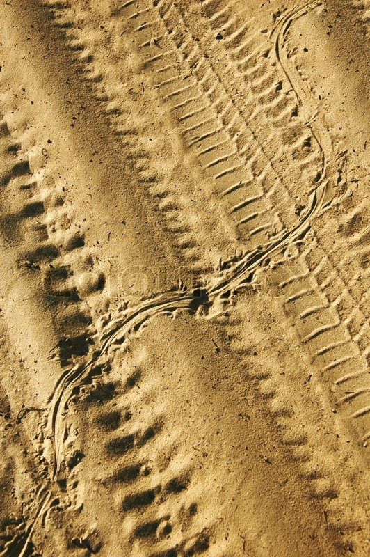 Lizard track above the tire track on the sand | Stock