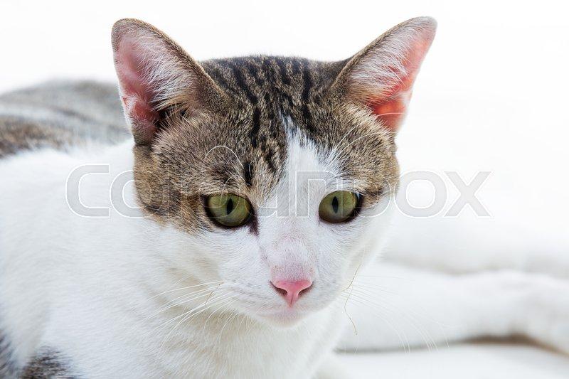Beautiful cat on white background, stock photo