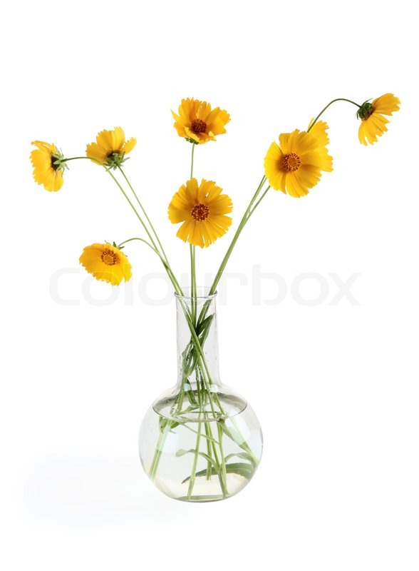 Three yellow flowers in a vase over white stock photo colourbox mightylinksfo