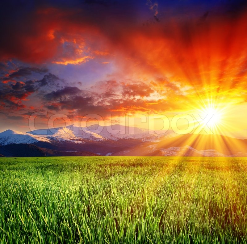 grass field sunset. Grass Field Sunset P