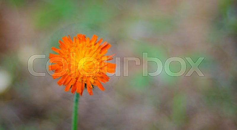 Stock foto af 'orange, levende, organ'