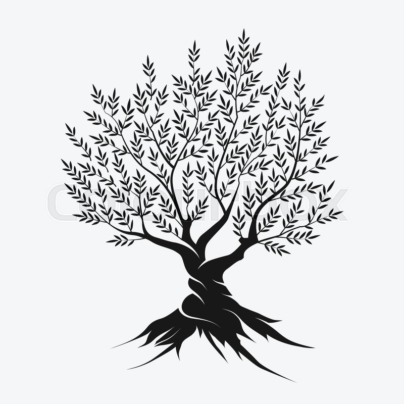 Olive tree silhouette icon isolated on gray background ... | 800 x 800 jpeg 93kB