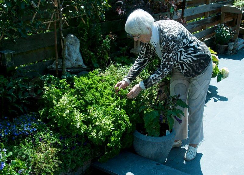 Lieblings Oma im Garten arbeiten | Stock Bild | Colourbox #PF_47
