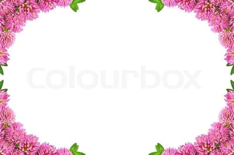 Frame made flowers of clover and green leaves isolated on white ...
