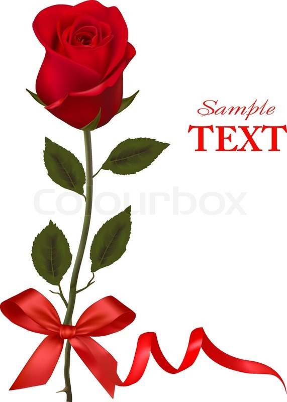 valentines day card. beauty red rose and gift box with bow, Natural flower