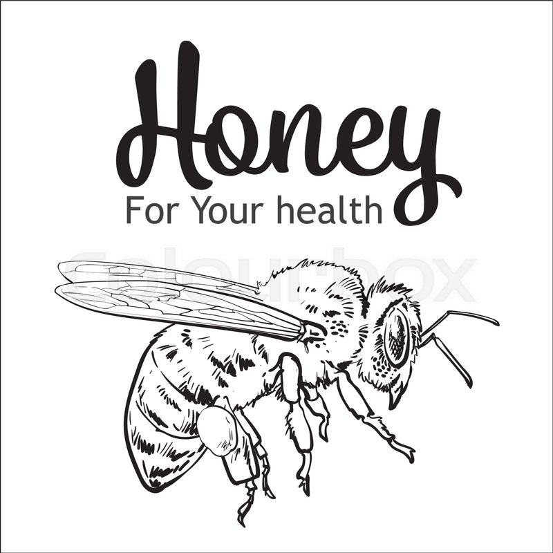 Flying honey bee, sketch style vector illustration isolated on white ...