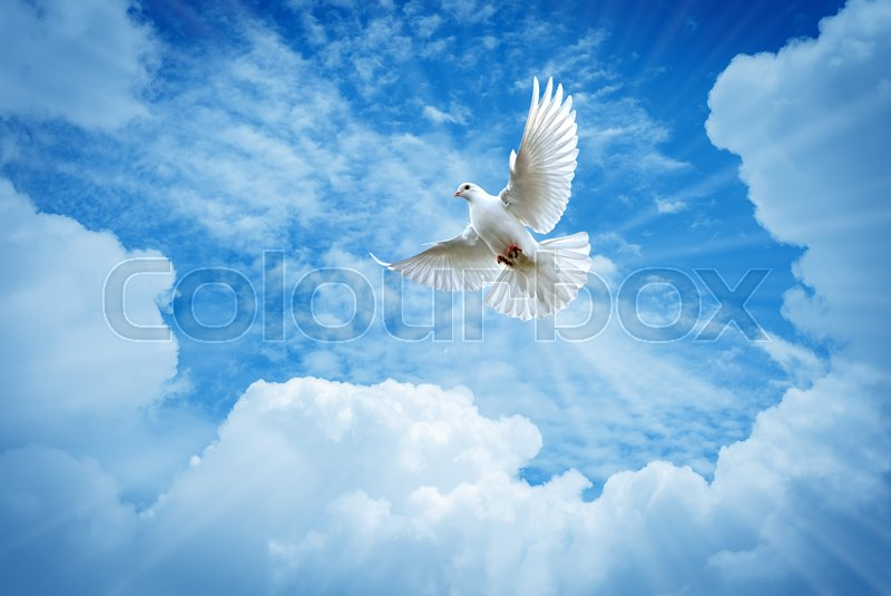 Dove in the air over cloudy sky concept of religion and peace, stock photo