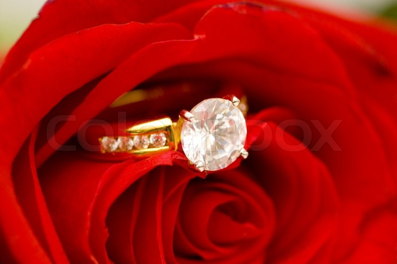 Diamond Ring Between The Petals Of Red Rose Stock Photo