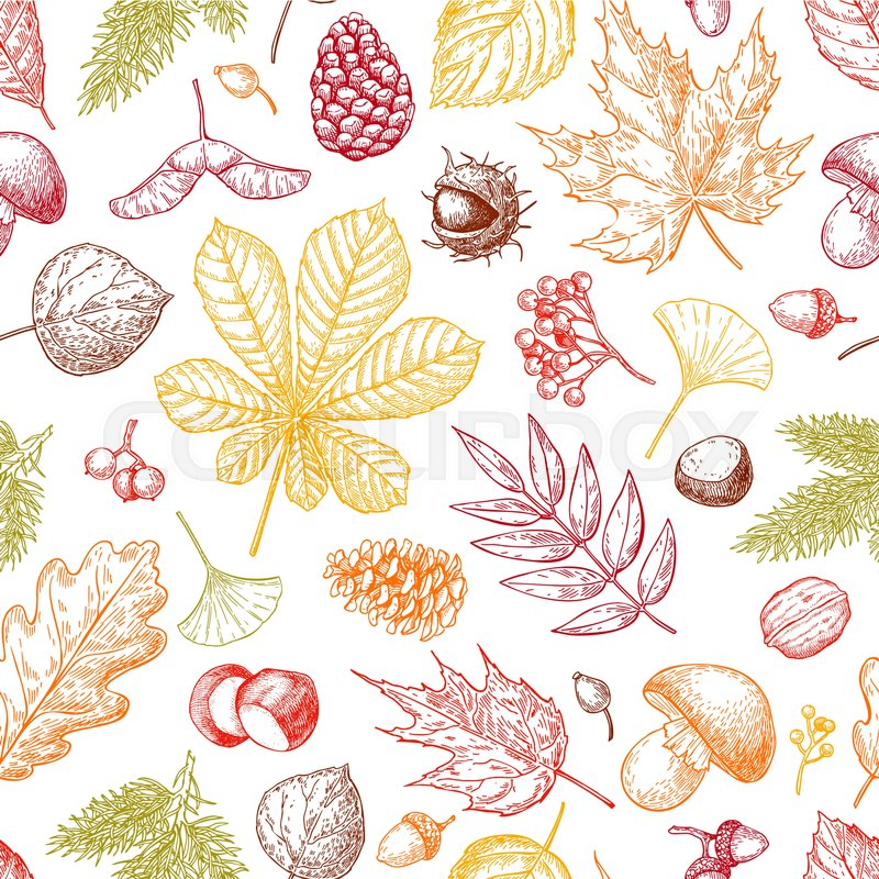Autumn seamless vector pattern with ...   Stock vector   Colourbox