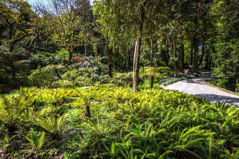 Garden of eden garden located in Sintra, Portugal | Stock Photo ...