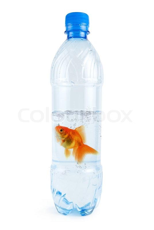 Bottle with drinking water and swiming there gold fish for Restaurants with fish bowl drinks near me