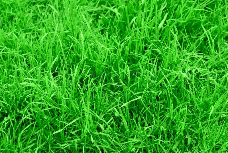 very succulent green grass background stock photo clip art grasshopper clip art grass cutting