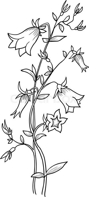 Isolated bluebell flower campanula vector background stock isolated bluebell flower campanula vector background vector mightylinksfo