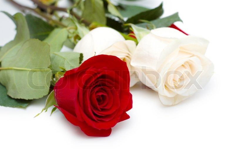 Red And White Roses Isolated On White Stock Photo