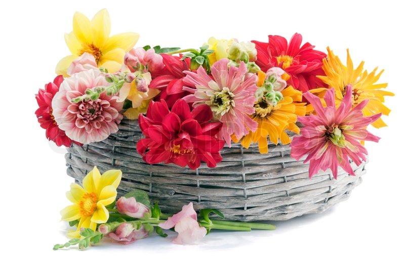 July Garden European Flowers For The Stock Image