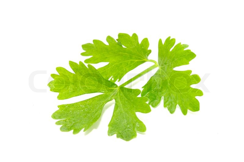 how to use celery leaves in recipes