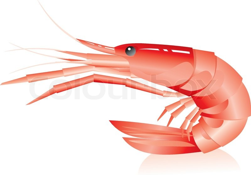 Supplier Shrimp Mail: Shrimp On A White Background