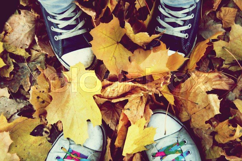 Autumn relation, stock photo