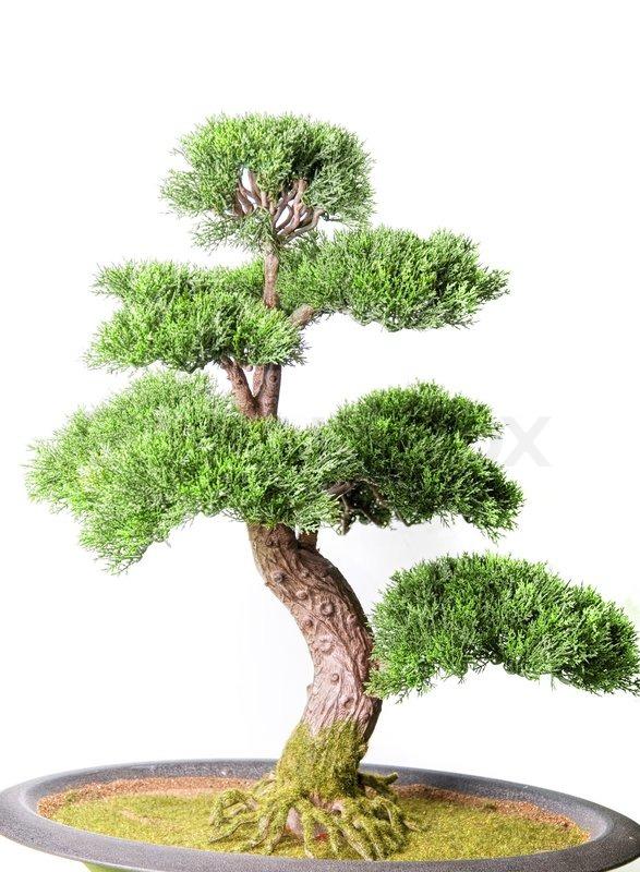 bonsai baum auf einem wei en hintergrund stockfoto colourbox. Black Bedroom Furniture Sets. Home Design Ideas