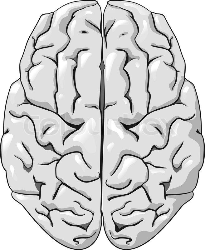 Human Brain Black And White Human Brain Isolated on White