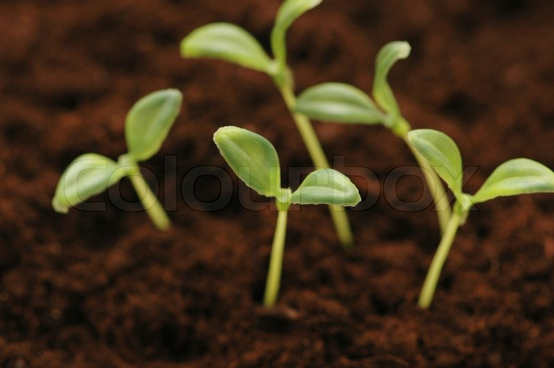new life concept seedlings growing in the soil stock photo