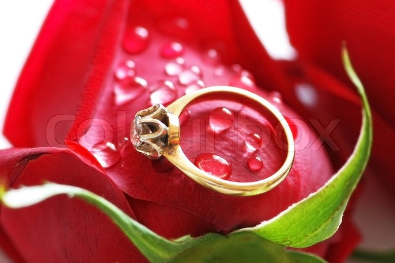 stock of image love rose with rings bride download red