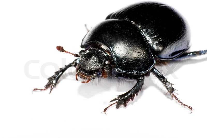 Black bug in upper left corner on white     | Stock image