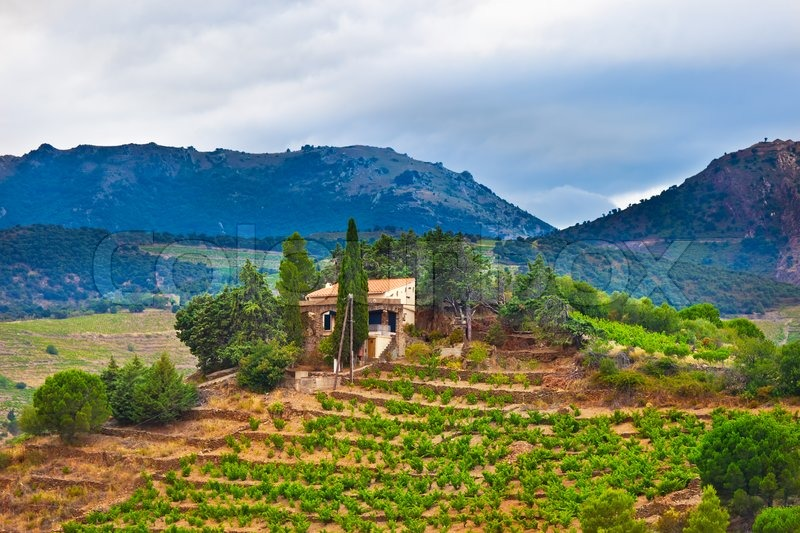 south france view of landscape with vineyards stock photo colourbox